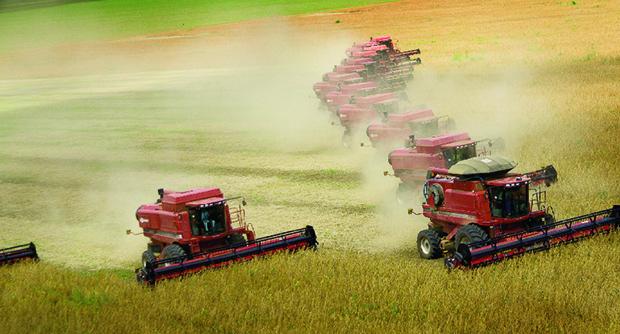 Com vocação de celeiro nacional, Goiás é o 4º maior em grãos e o 3º em bovinos (abaixo) / Fotos: Fernando Leite/Jornal Opçãoi