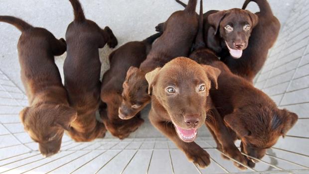 Novas resoluções enrijecem normas para pet shops e feiras de animais