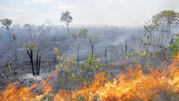 Corpo de Bombeiros registrou mais de 200 incêndios no final de semana