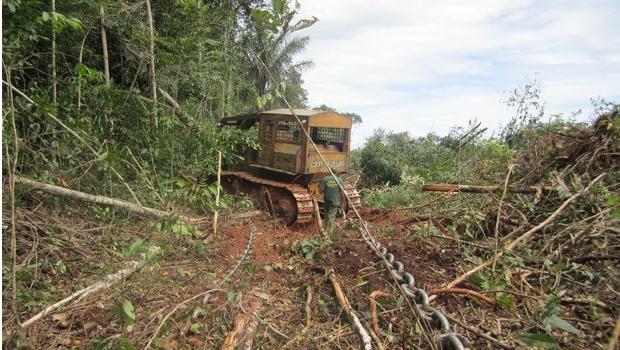 Desmatamento assola bioma brasileiro | Divulgação