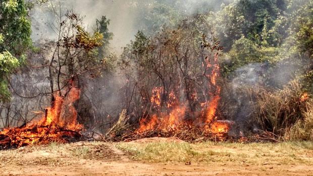 Presos suspeitos de causar incêndio no Jardim Botânico