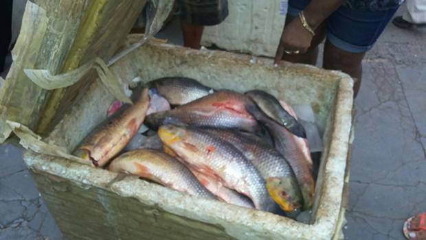 Idosos que transportavam 1,2 mil kg de peixe são multados