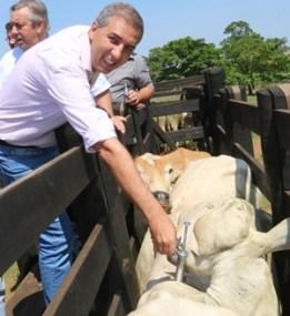 José Eliton inicia a vacinação | Foto: Jota Eurípedes