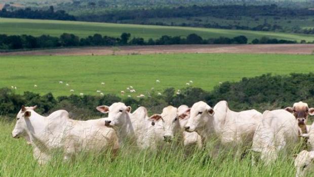 Senado aprova projeto que aumenta pena para roubo de gado