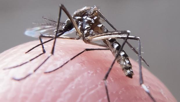 Goiânia está em risco para surto de dengue, diz Ministério da Saúde