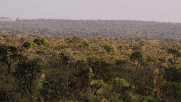 Em resposta ao desmatamento no Brasil, empresa norueguesa suspende compra de ração da Cargill