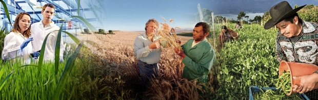 bayer-banner-crop-science