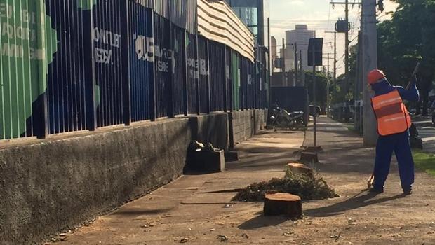 A pedido da Consciente, Prefeitura de Goiânia arranca árvores saudáveis da calçada do Nexus