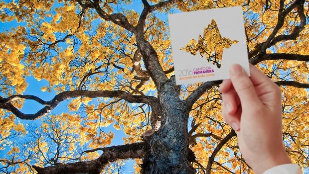 Canto da Primavera é premiado em festival internacional