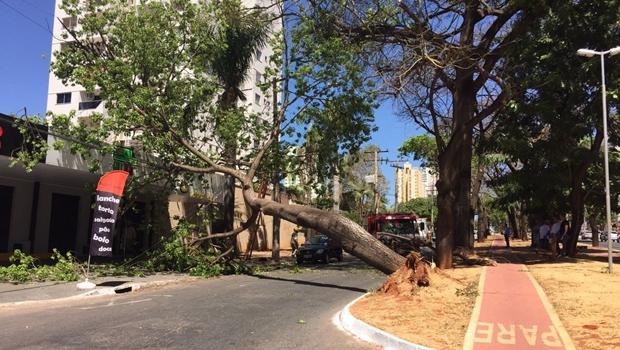 Árvore cai e interdita Couto de Magalhães em Goiânia