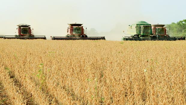 Janela de plantio da soja será liberada em outubro