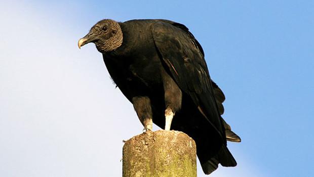 """Tradução do poema """"The Raven"""", de Edgar Allan Poe"""