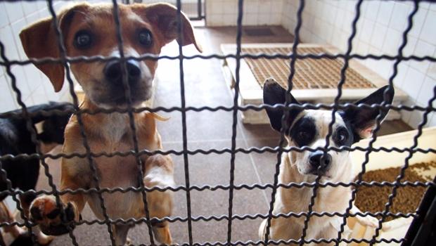 CCJ rejeita veto a projeto que proíbe comercialização de animais com menos de oito meses em pet shops