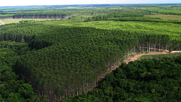 Ciclo de workshops sobre floresta plantada anima cadeia produtiva do setor
