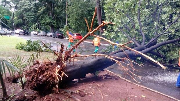 Chuva causa pontos de alagamento e queda de árvores em Goiânia