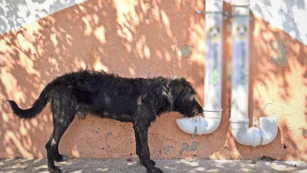 Projeto propõe implantação de comedouros para animais em Goiânia