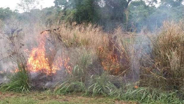 Mulher é presa após colocar fogo em vegetação na BR-050, em Catalão