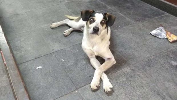 Vereadores de Aparecida aprovam lei para multa de até R$ 200 mil para maus tratos a animais