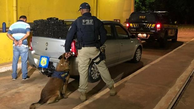 PRF apreende 100 kg de maconha com ajuda de cão farejador
