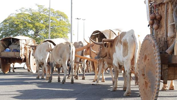 Desfile em Trindade deve reunir 400 carros de boi