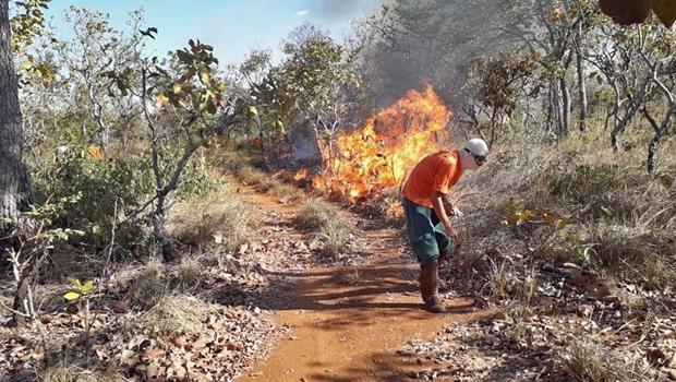Brigadas controlam focos de incêndio nas regiões de Palmas e Luzimangues