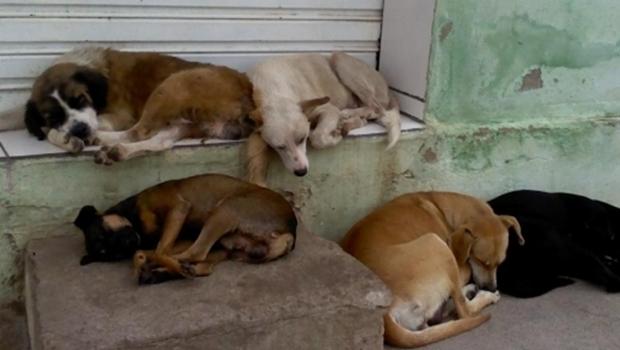 Pandemia aumenta casos de abandono de animais em Goiânia