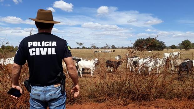 Polícia Civil prende acusados de roubar mais de 50 cabeças de gado em Itumbiara