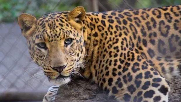 Polícia Federal deflagra operação de combate a caça de animais silvestres, em Goiás