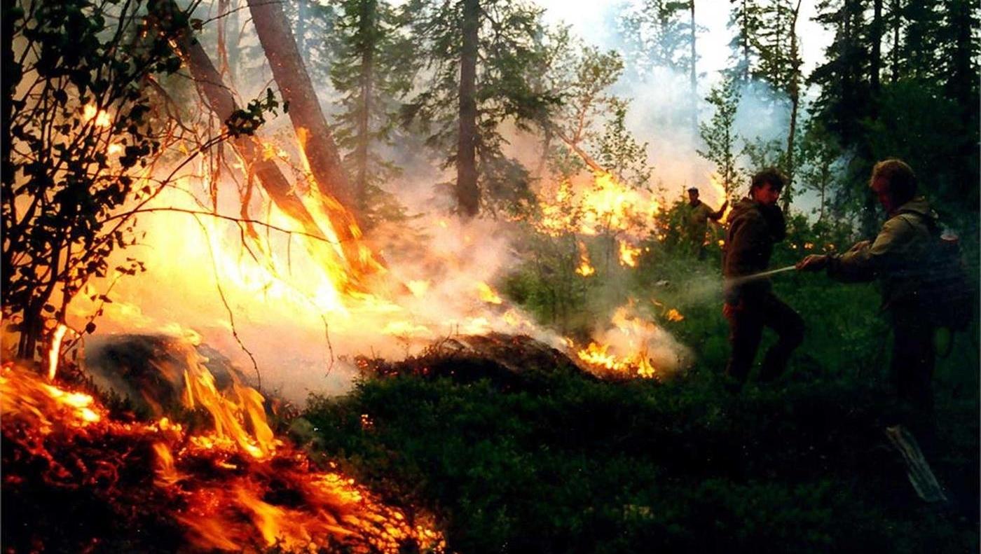 Maior floresta do mundo, na Rússia, está ameaçada. Por que só falam da Amazônia?