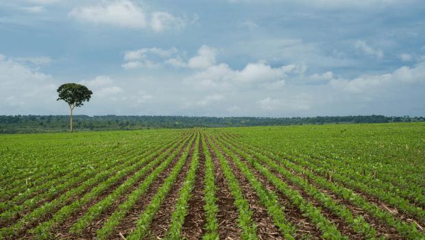 Agronegócio representa mais de 80% das exportações goianas