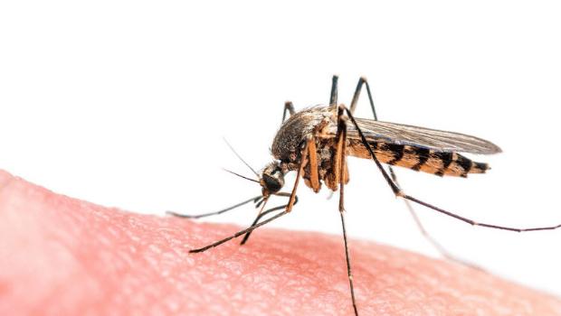 Estudante da UFG ganha prêmio por desenvolver dispositivo capaz de detectar zika e dengue ao mesmo tempo