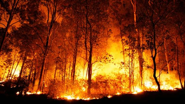 Cerrado tem área de 433 km² sob risco de desmatamento; focos de queimada superam dados anteriores