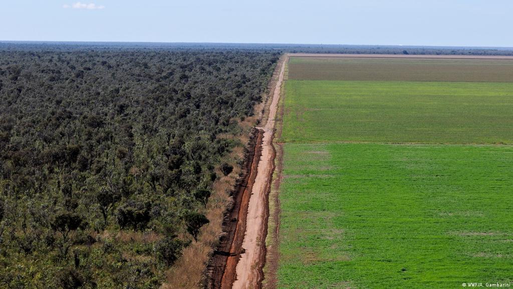 Tudo era Gerais e os Gerais eram de todos: a destruição do Cerrado e o fim do mundo