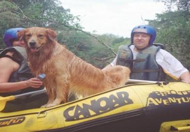Brotas Eco Resort lança combos promocionais para você viajar com seu pet