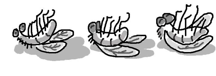 fliesflattened