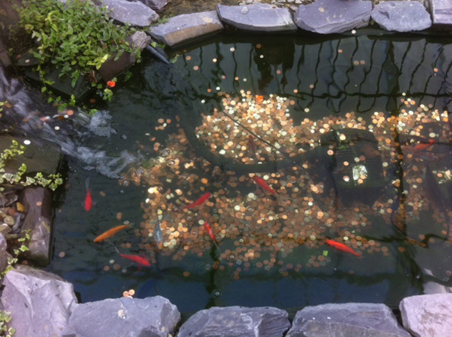 Goldfish at Blenheim