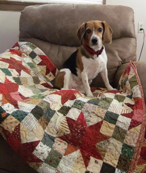 Puppy with Quilt 1