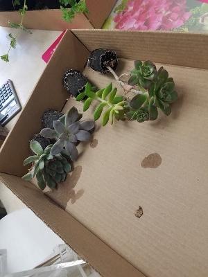 Succulents 1 (300x400)