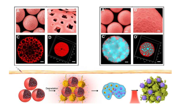 Researchers develop high-performance cancer vaccine using novel microcapsules
