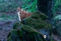 v Nationalpark Bayerischer Wald