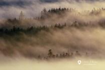 Přechod inverzní vrstvy oblačnosti v mlhy