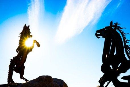 Sunshine-on-Stallions-1478
