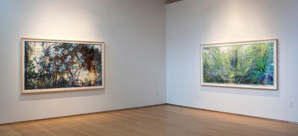 Joseph Raffael 2015 Exhibition at the Nancy Hoffman Gallery