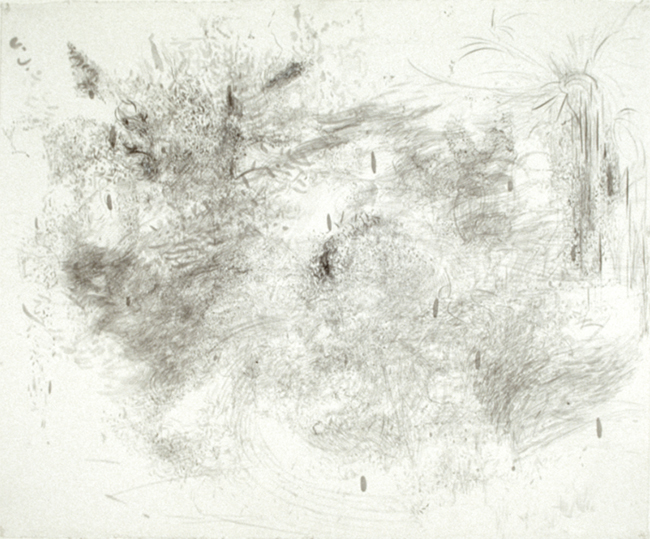 Wheat, ink on paper, 26 x 32 inches, 1979-80. Private Collection.