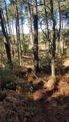 Promenade autorisée pendant le confinement dans la forêt des landes avec enfant et husky siberien.