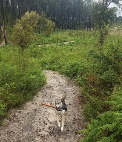 Chien mouillé confinement forêt landes