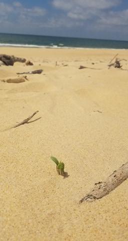 Minimaliste et plaisirs simples comme la joie de voir pousser une plante sur la plage