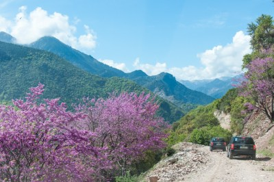 Greece - Pindus, Agrafa Road with Judas Tree.