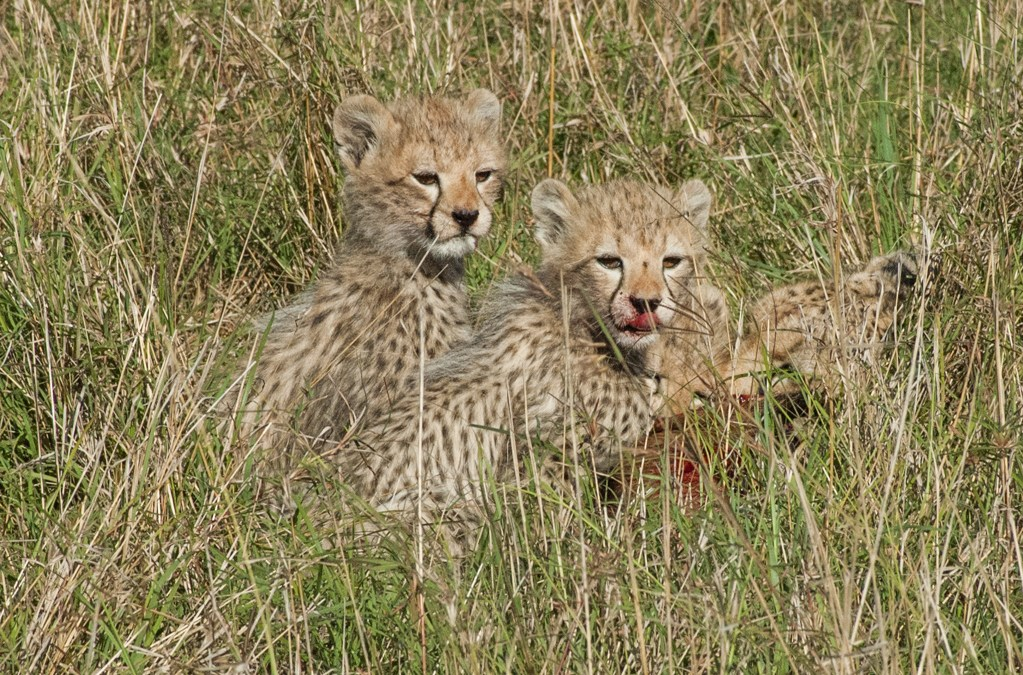 Responsible Tourism Practices Enhance Kenya Safari Experience