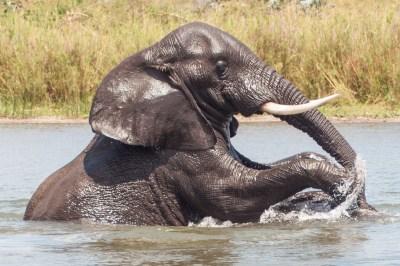 Malawi - Liwone Elephant at Play